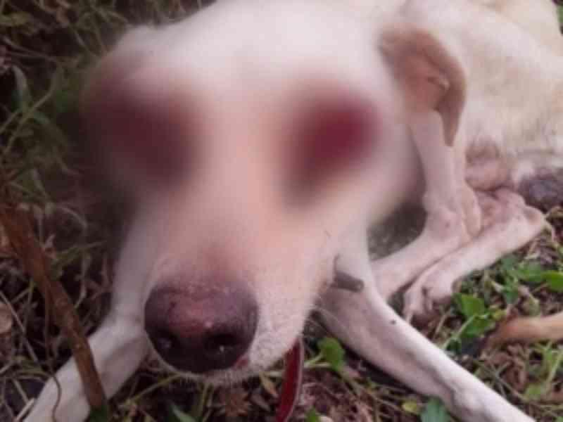 Cachorro com tumor nos olhos não foi vítima de negligência, conclui polícia