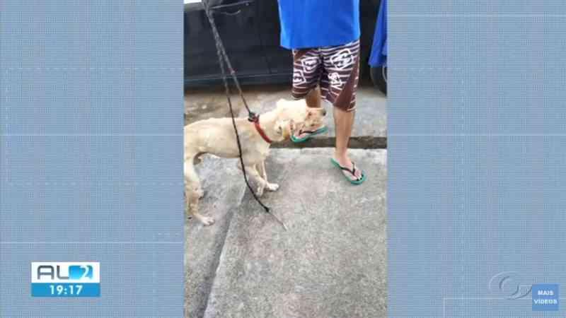 Veterinários diagnosticam tumor venéreo em cão encontrado ferido em Major Izidoro, AL; olhos não foram arrancados