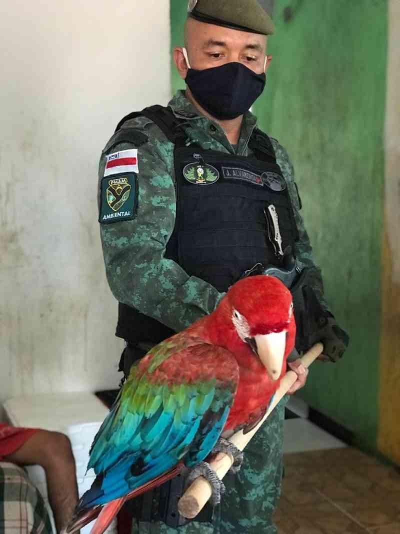 Mais de 650 animais silvestres são resgatados neste ano no Amazonas