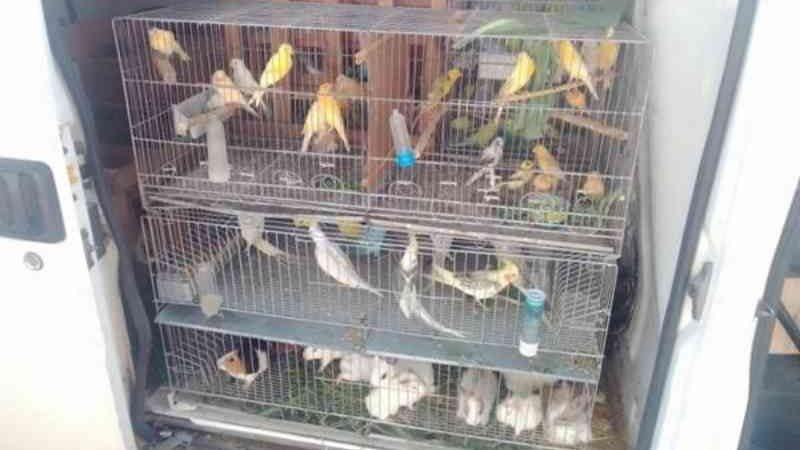 Mais de 475 animais silvestres são resgatados no interior da Bahia