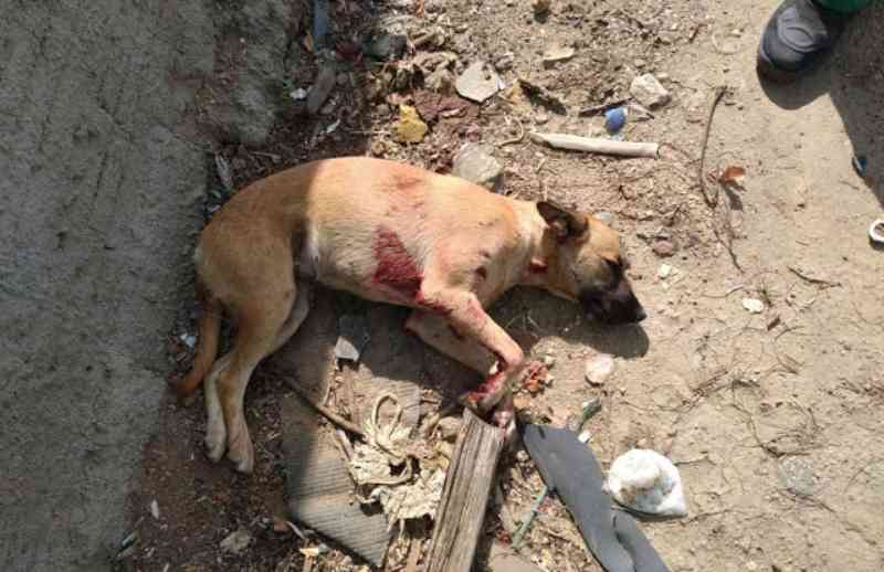Cadela é atingida por tiro de espingarda em Jacobina (BA); cidadã pede justiça
