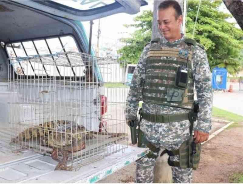 Quase mil animais já foram resgatados nas vias urbanas de Salvador (BA) em 2020