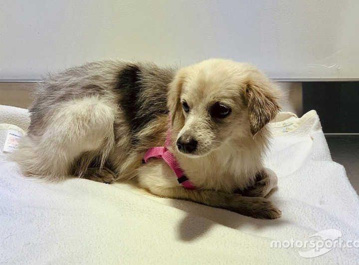 Animal foi examinado por veterinário e agora aguarda nome