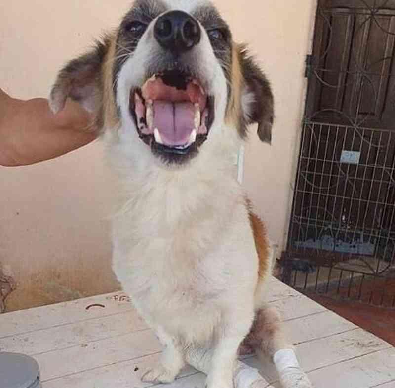 Abrigo de proteção animal em Eusébio (CE) enfrenta dificuldades e promove vaquinha online