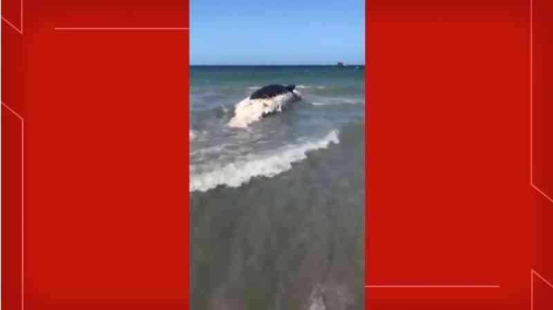 Baleia é encontrada morta na Praia do Preá, litoral do Ceará