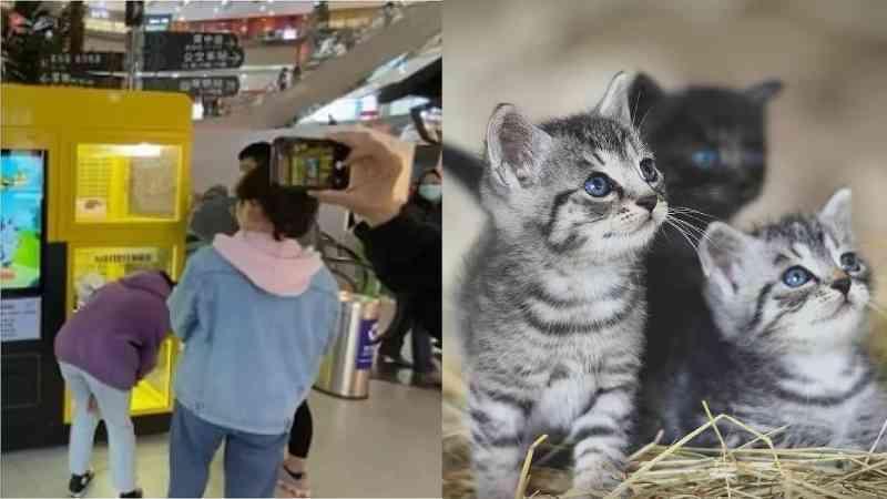 Shopping com máquina de jogos que oferece cães e gatos vivos como brindes na China revolta internautas