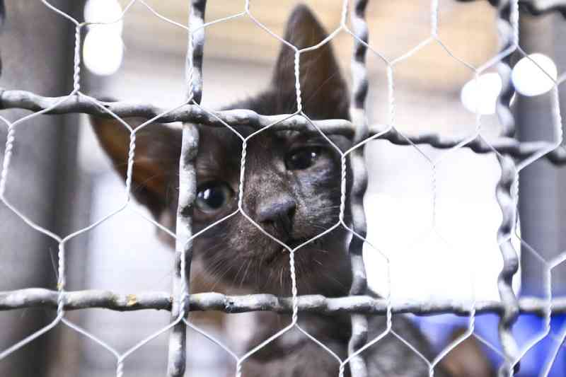 FOTOS: 21 cães e gatos esperam por adoção na Zoonoses de Brasília, DF