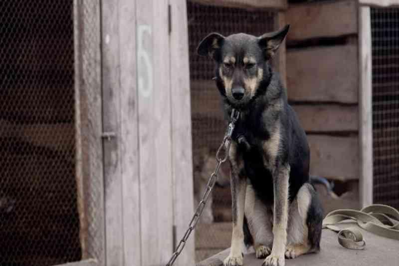 Deputados aprovam projeto que proíbe acorrentamento de animais no DF