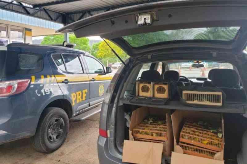Polícia Rodoviária Federal prende motorista com 200 pássaros silvestres na Bahia