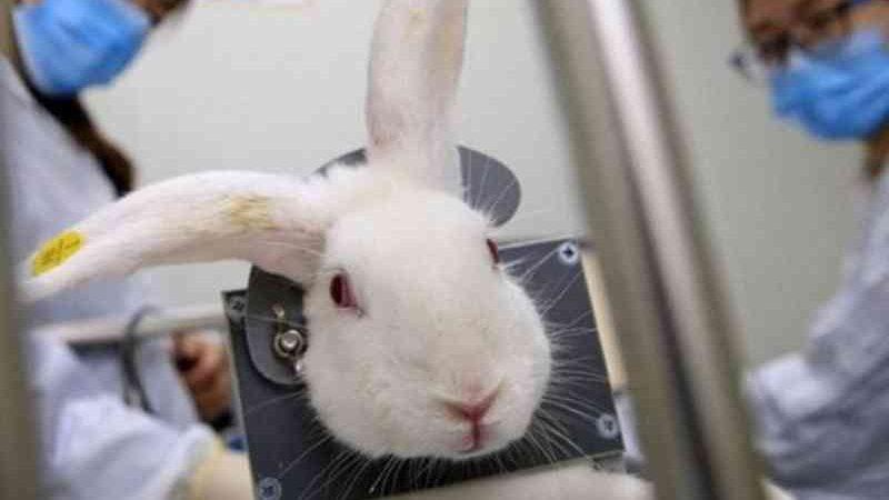 Testes de cosméticos em animais são proibidos no DF, com multa de R$ 1 milhão