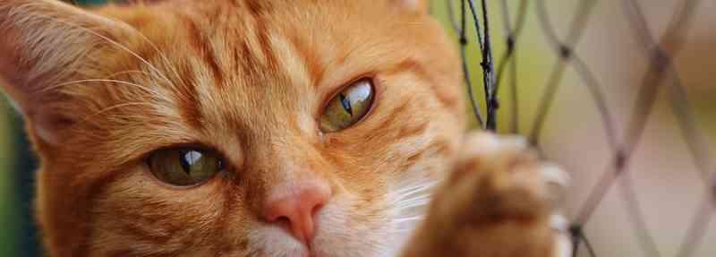 Tribunal de Justiça do DF mantém posse compartilhada de animal de estimação