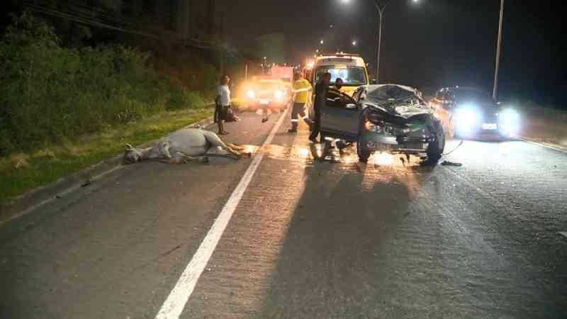 Motorista atropela e mata cavalo solto na pista na Rodovia Sol, em Vila Velha, no ES