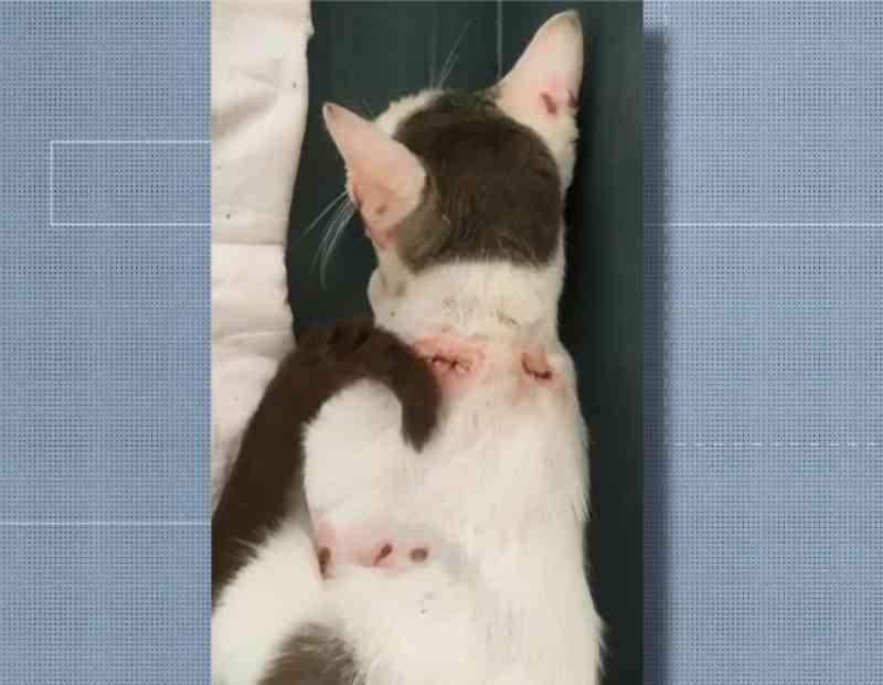Gato é resgatado no ES após ser vítima de maus-tratos e ter vergalhão espetado na cabeça
