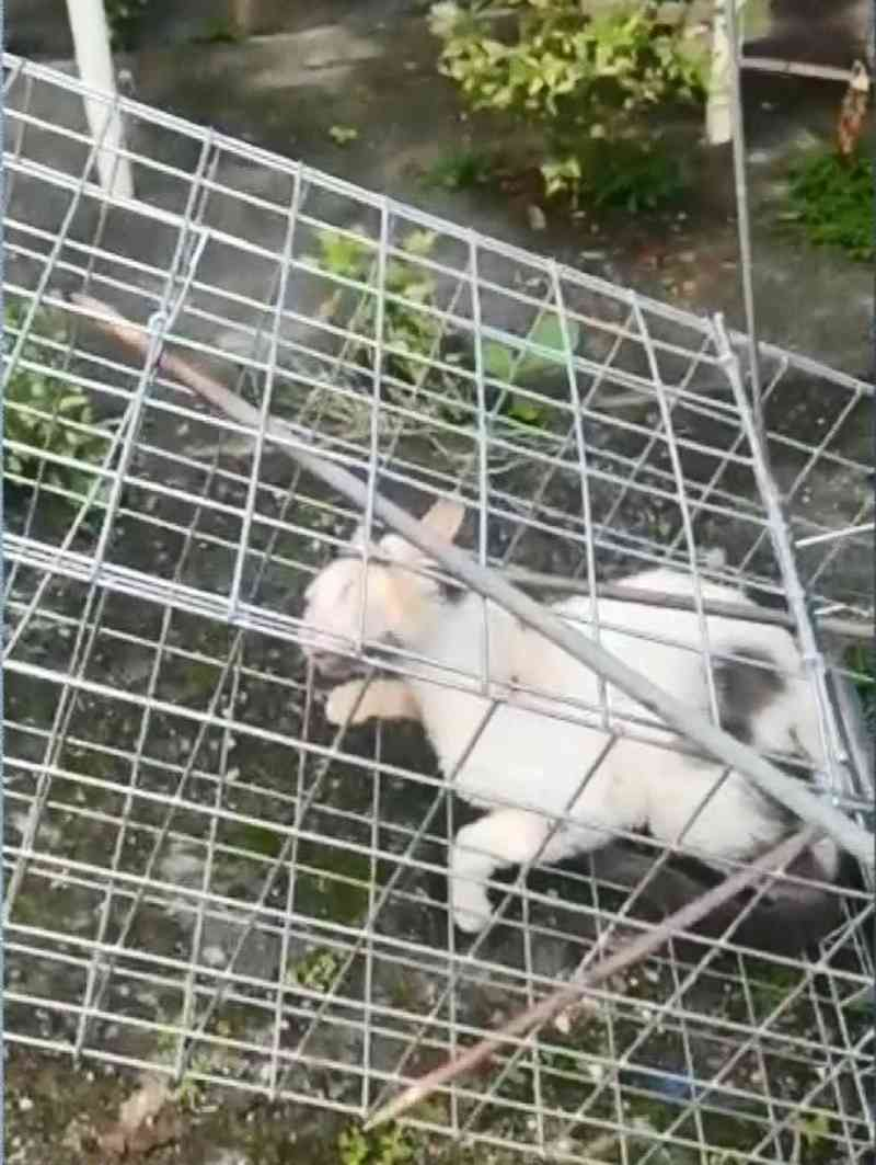 Suspeito de ferir gato com vergalhão no ES tem prisão decretada e está foragido