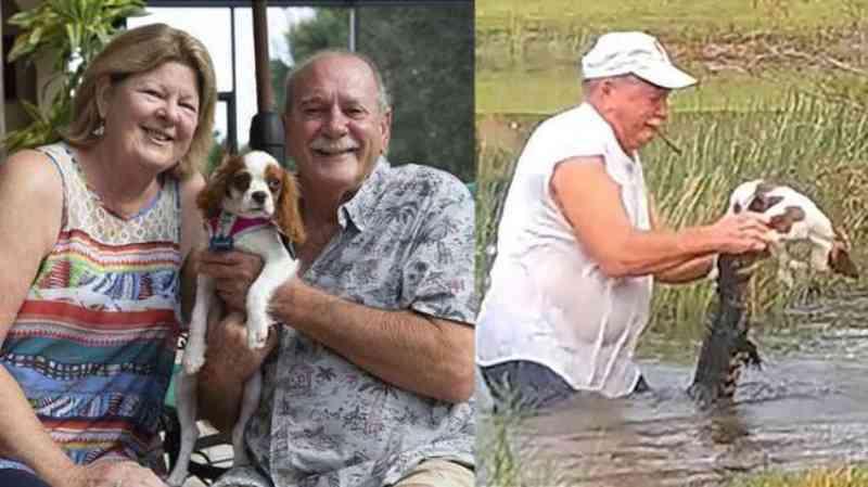 Tutor que salvou cachorro da boca de crocodilo na Flórida relata a condição do cão