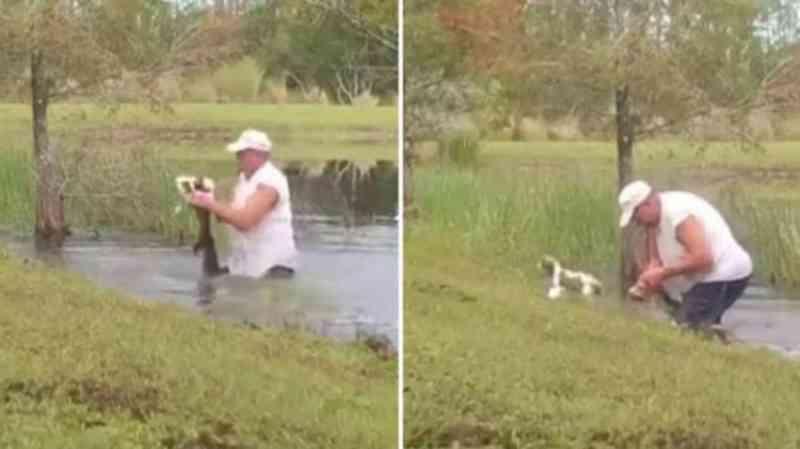 Homem abre boca de jacaré e salva cachorro de estimação