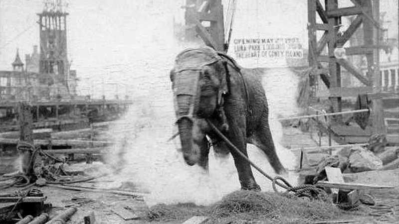 Eletrocutada em praça pública e esquecida por 70 anos: a saga da elefanta Topsy