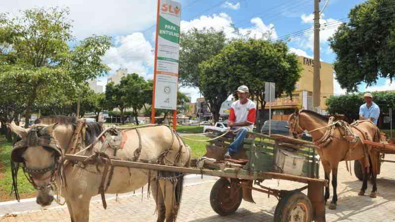 Fim da tração animal: Distrito Federal prorroga prazo para carroceiros se inscreverem em site