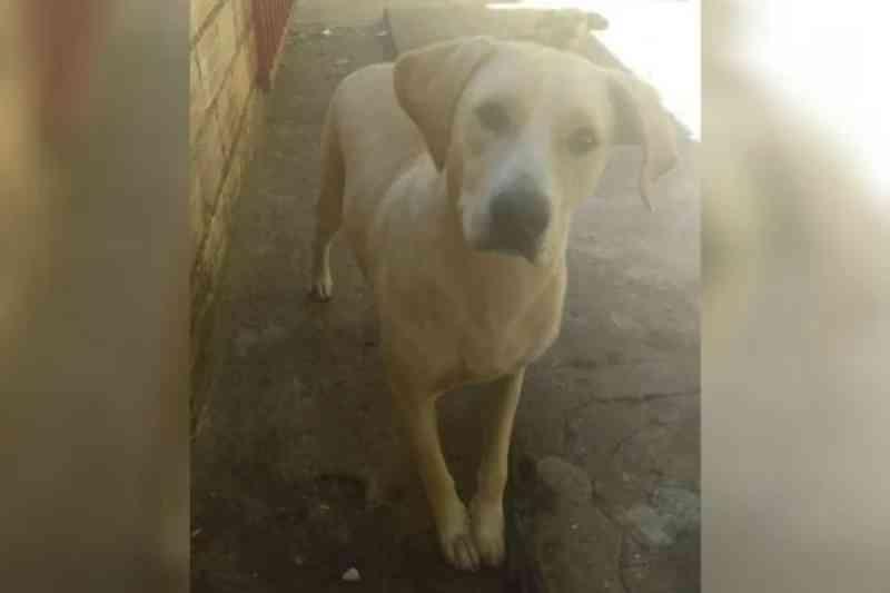 Polícia apura se candidato a vereador em Caldas Novas (GO) estuprou cadela