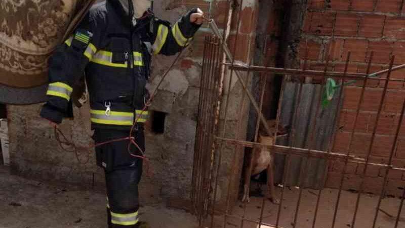 Cão pula de laje de quase 3 metros de altura por medo de fogos de artifício e cai na casa do vizinho, diz bombeiro
