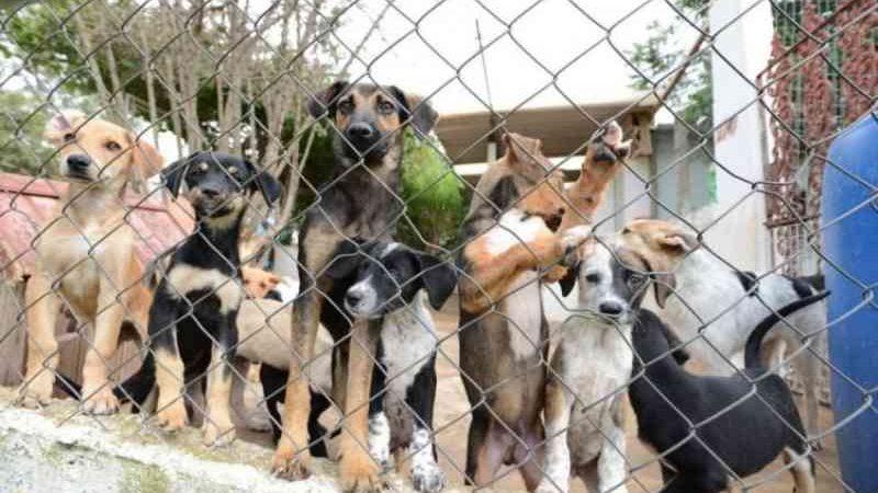 Governo de Goiás sanciona lei que institui Abril Laranja contra maus-tratos a animais