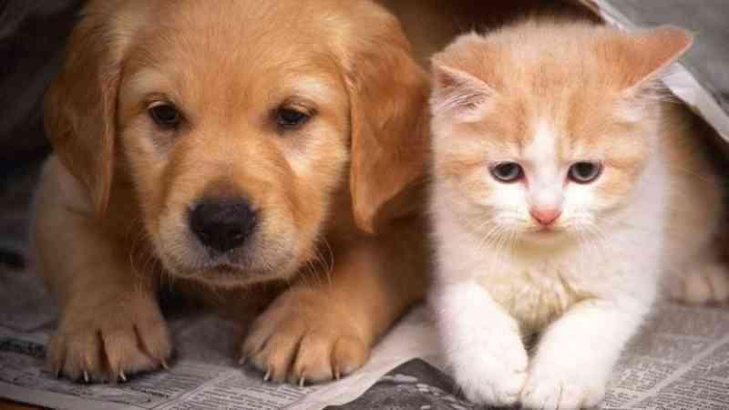 Grécia aprova até 10 anos de prisão para maus-tratos a animais