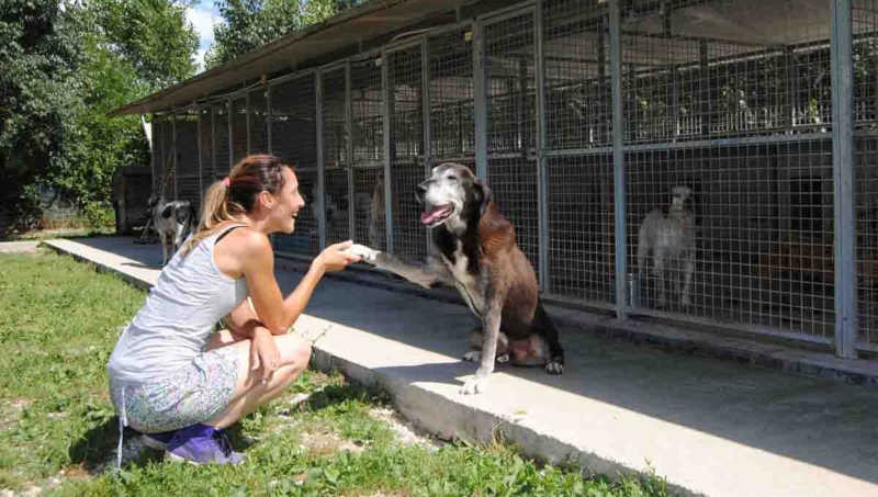 Veterinário gratuito para quem adotar cão ou gato na Itália