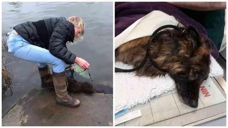 Cão é resgatado após ser jogado em rio amarrado a pedra: 'Crueldade'