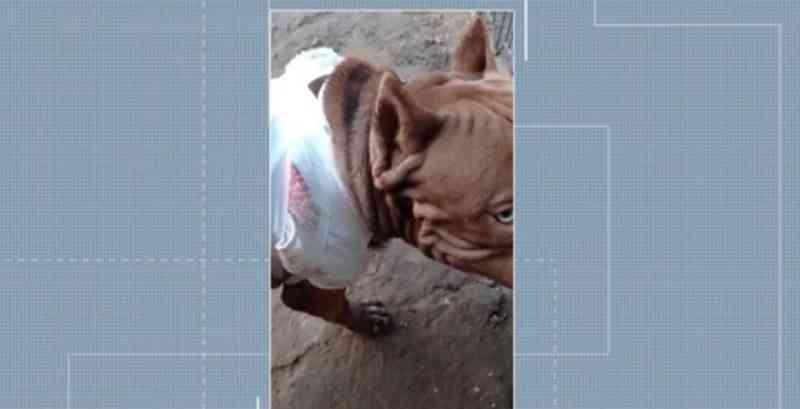 Tutor de poodle é preso após esfaquear pit bull da vizinha em Bacabal, MA