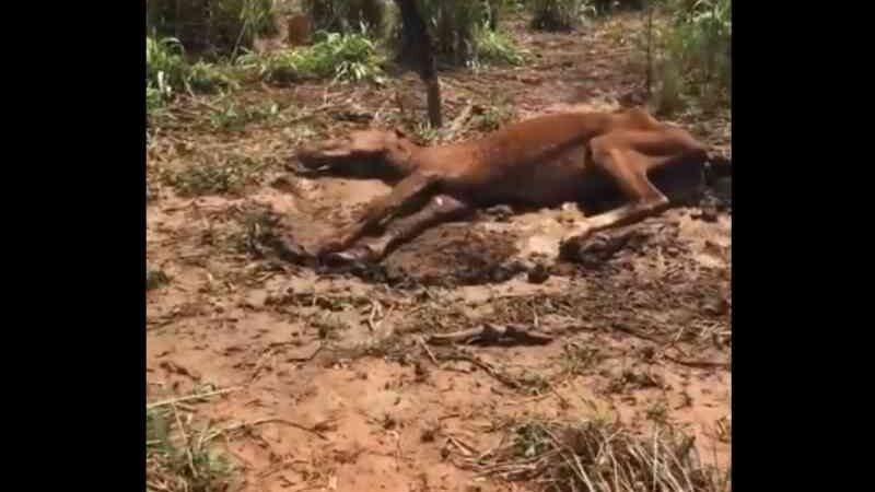 Cavalo morre após ser abandonado no Povoado Jenipapo, no Maranhão