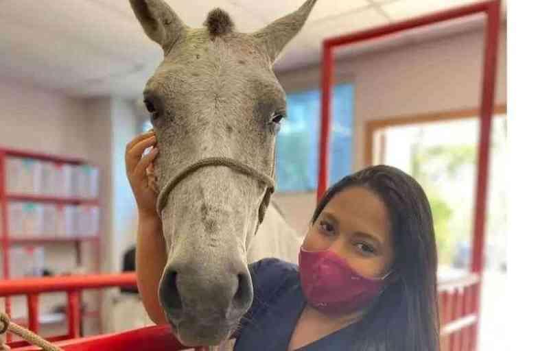 Alunos de veterinária vão prestar atendimento gratuito a cavalos de carroceiros em Belo Horizonte, MG