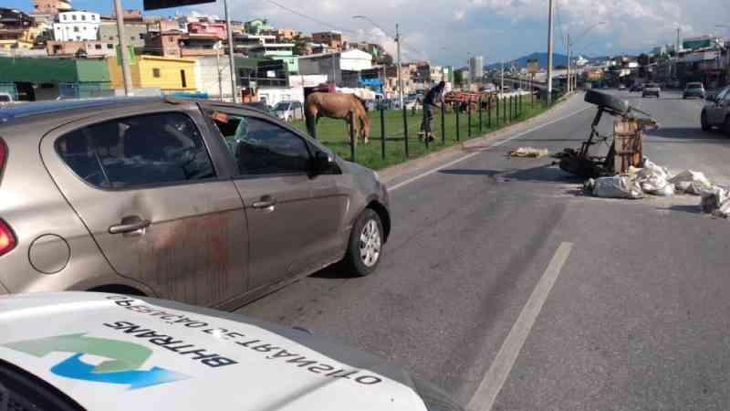 Cavalo fica ferido em acidente entre carro e carroça em Belo Horizonte, MG
