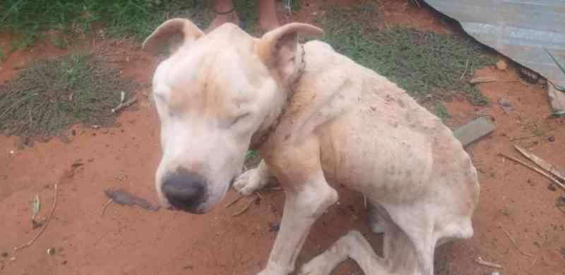 PMMA resgata cão em situação de maus-tratos em Ituiutaba, MG