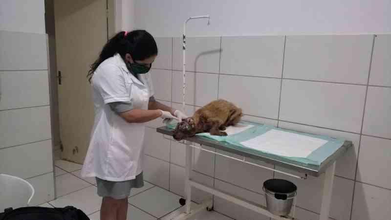 Cachorra é resgatada com ferimentos graves após denúncia de maus-tratos e tutor é encaminhado à delegacia em MG