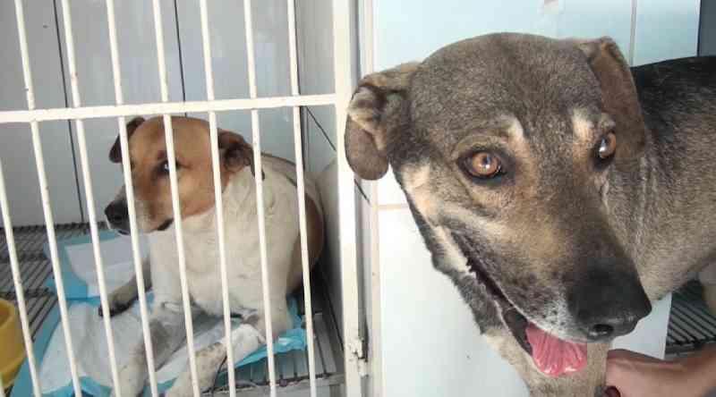 Voluntários denunciam envenenamento de cães no centro de Patos de Minas, MG