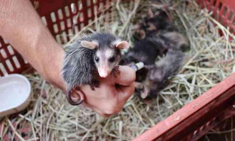 Animais silvestres terão atendimento garantido por mais um ano na Usipa, em Ipatinga, MG