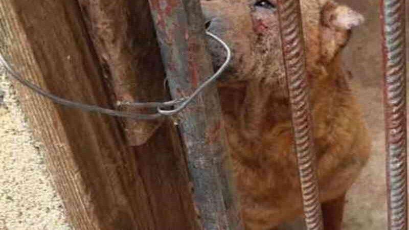 Criadora é detida por manter canil irregular no sul de Minas Gerais