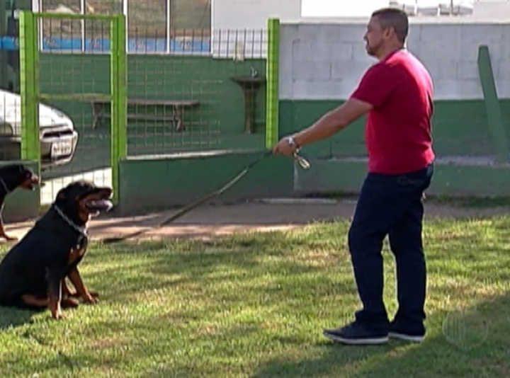 Câmara de Uberlândia aprova projeto de lei que proíbe utilização de equipamentos controlam ou limitam o comportamento de cães de forma agressiva — Foto: Reprodução/TV Diário