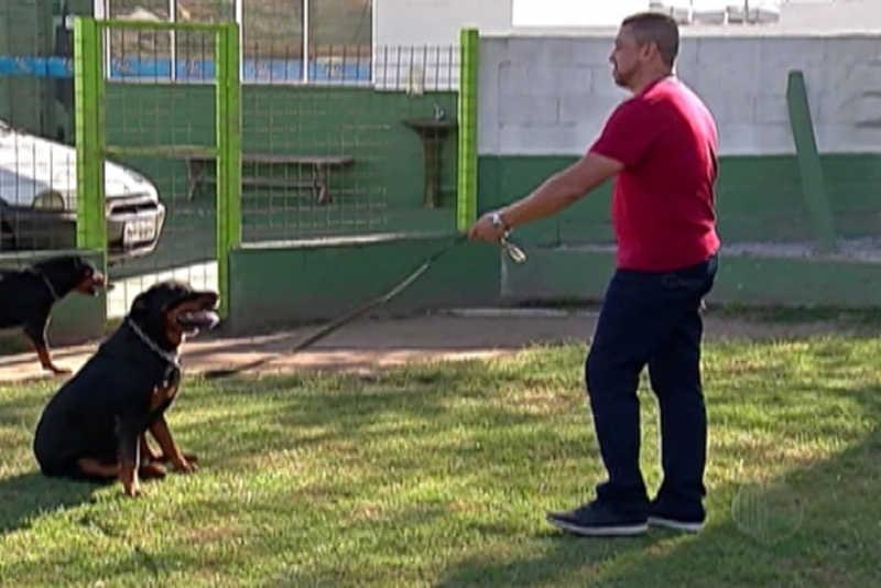 Câmara de Uberlândia (MG) aprova projeto que aumenta restrições à utilização de equipamentos que podem machucar animais