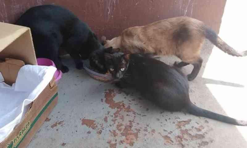 Proibido por lei: CCZ já notificou 60 por alimentar animais de rua em Campo Grande, MS