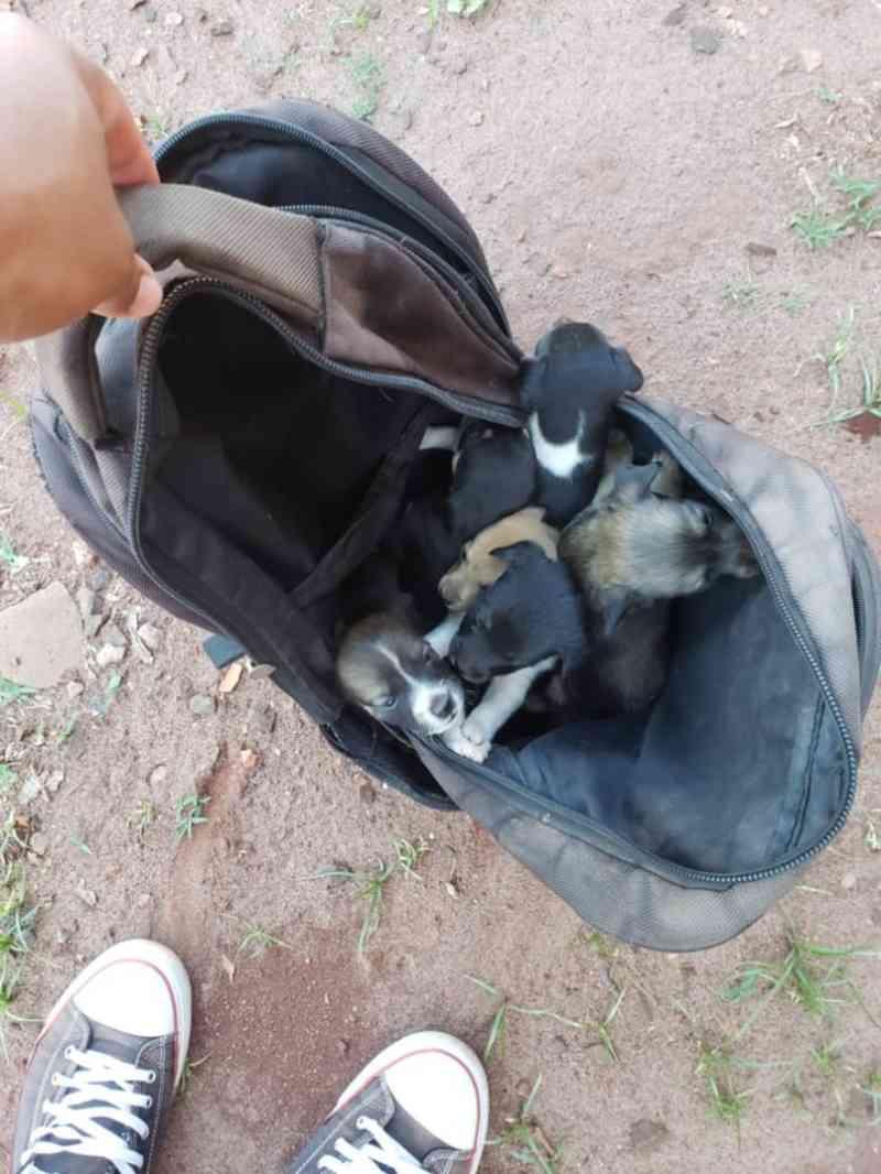 Jovem resgata 6 filhotes de cachorro que estavam dentro de mochila abandonada em terreno baldio