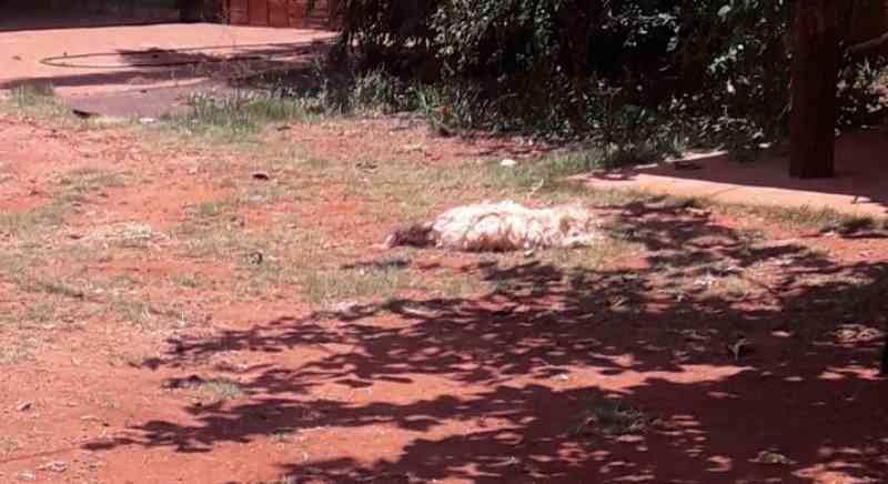 Após mau cheiro, moradores encontram animais mortos por abandono de tutora, em Campo Grande, MS
