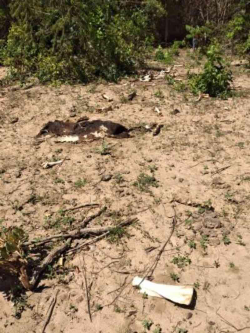 Polícia Militar flagra maus-tratos a animais em fazenda em Três Lagoas, MS