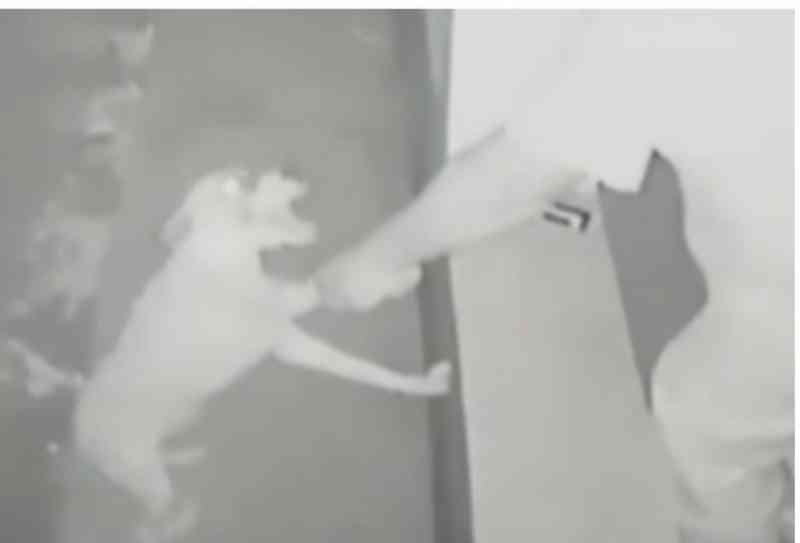 Flagrado por câmera agredindo cachorro com cinto e atirando contra animal é preso em MS