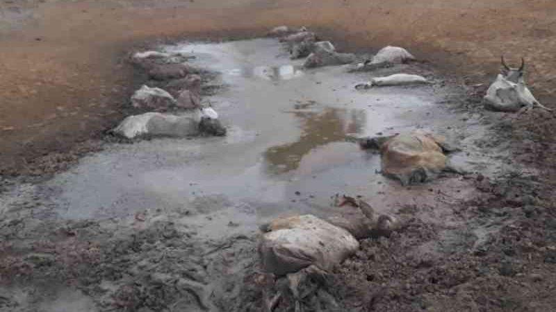 Pecuarista que deixou gado sem comida é investigado por desmatar bioma pantaneiro