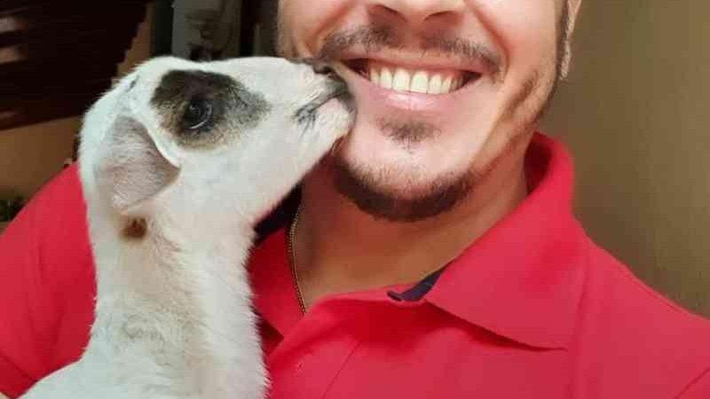 Rejeitada pelo rebanho ao ter pata quebrada, ovelha é adotada em MS e tem cachorros como 'irmãos'; vídeo