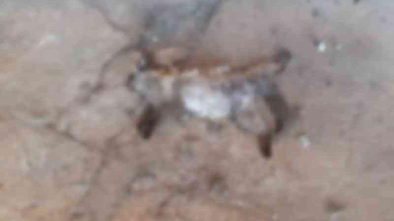 """""""Mascotes"""" da UFMS, gatos são achados mortos e alunos suspeitam de envenenamento"""