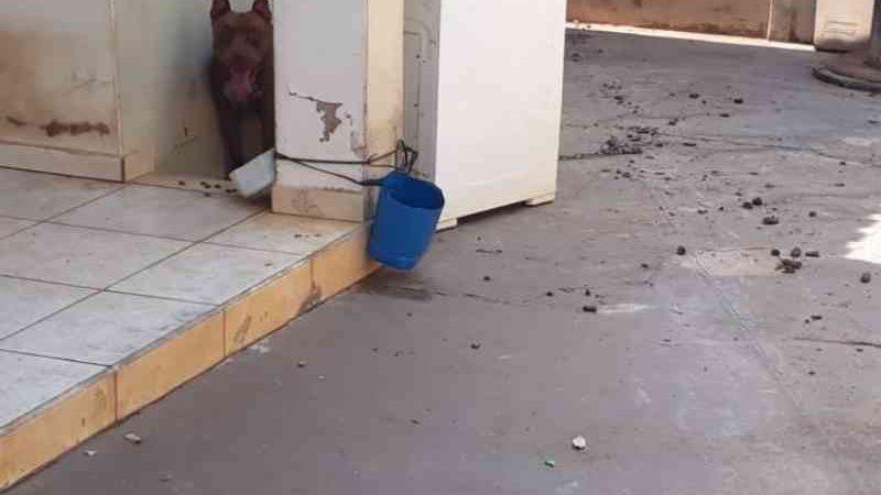 Vídeo: denúncia de cachorro que sofre maus-tratos em residência em Cassilândia, MS