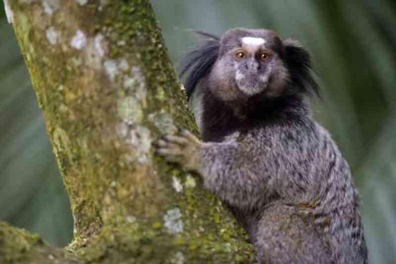 Mais seis macacos são encontrados mortos no Parque Mãe Bonifácia, em Cuiabá, MT