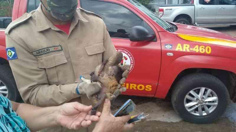 Bombeiros resgatam macaco-prego atropelado em rodovia de Mato Grosso